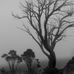 Snowgums in the Mist by Carol Hall Scored 13 2nd Place