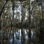 Spring Flood (Lorraine Lees)