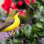 Sunbird (Trevor Bibby)