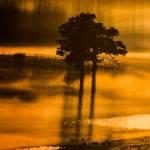 Sunrise Through the Fog by Steve Demeye Scored 12 3rd Place