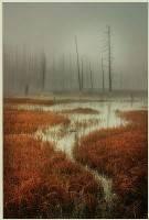 Tanglewood Creek - Robert Morgan (LRPS) : Merit