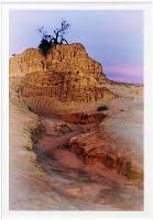The Last Tree (Robert Morgan) Merit