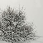 Tree in Snow (Judy Mc Eachern) Score 11