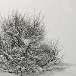 Tree in Snow (Judy Mc Eachern) Score 11