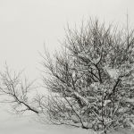 Tree in Snow by Judy McEachern 1st Place + Herb Richmond Print of the Year