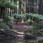 Treefern Sanctum (Henrietta Camilleri) Highly Commended