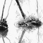 Water Reflections No 1 (Betty Bibby)