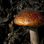 Weathered Mushroom by Murray McEachern