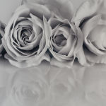 White Roses by Janet Rogerson Merit
