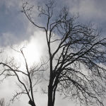 Winter Sun in Ballarat by Murray McEachern Scored 11 Highly Commended