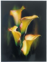 Yellow Arums (Jenni Horsnell) Merit