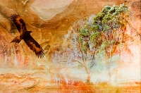 Eagle Spirit ( Kerrie Purcell) Highly Commended