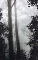 Mountain Mist (Lorraine Lees) 2nd Place
