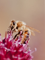 Bee&#quote;s Eye View - 3rd Place Lorraine Lees