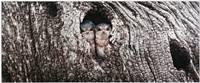 Peek-A-Boo (Darren Bennett) Merit