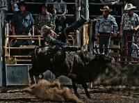 Rodeo (Bob Hayter) Merit